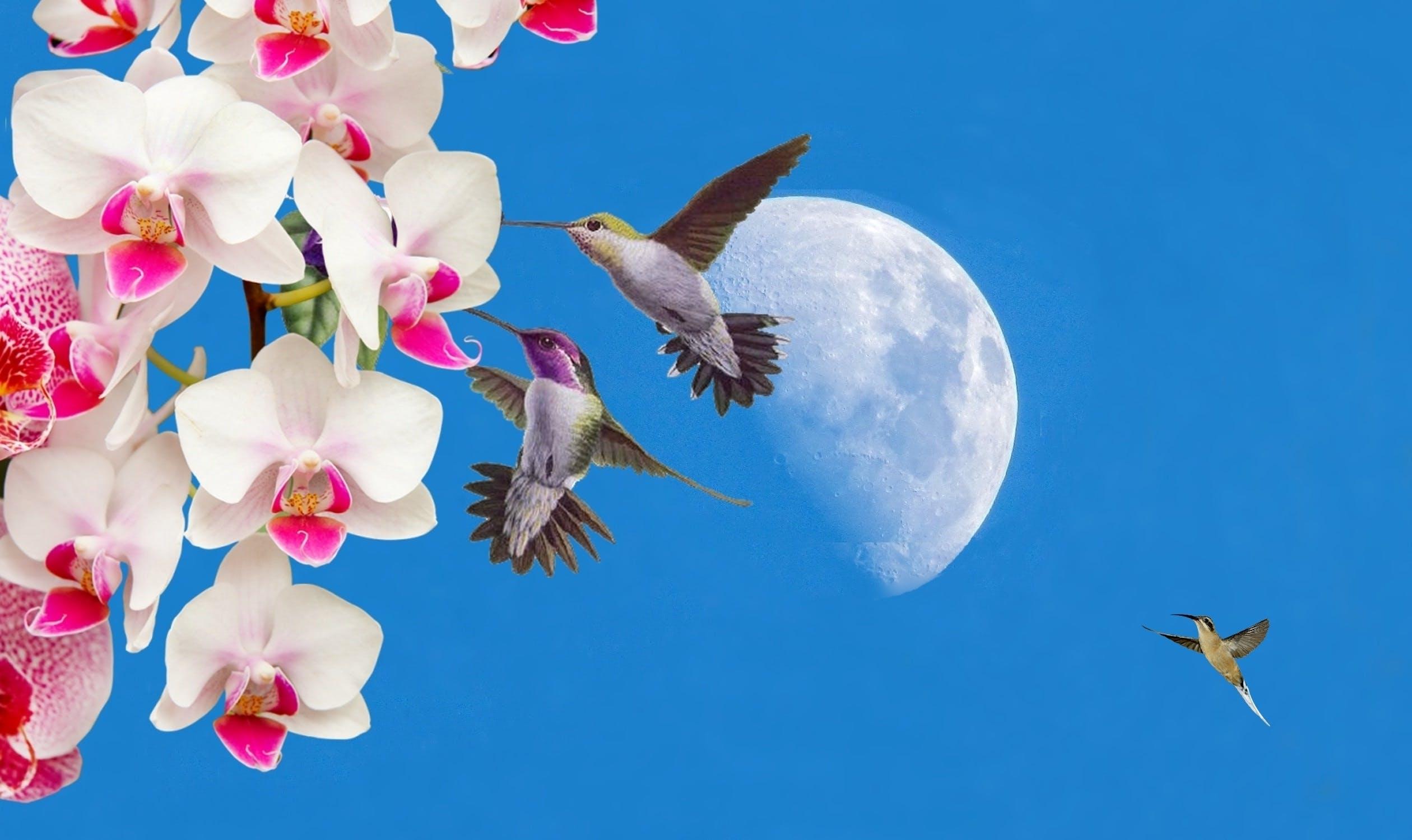 beija-flor, céu azul, flores