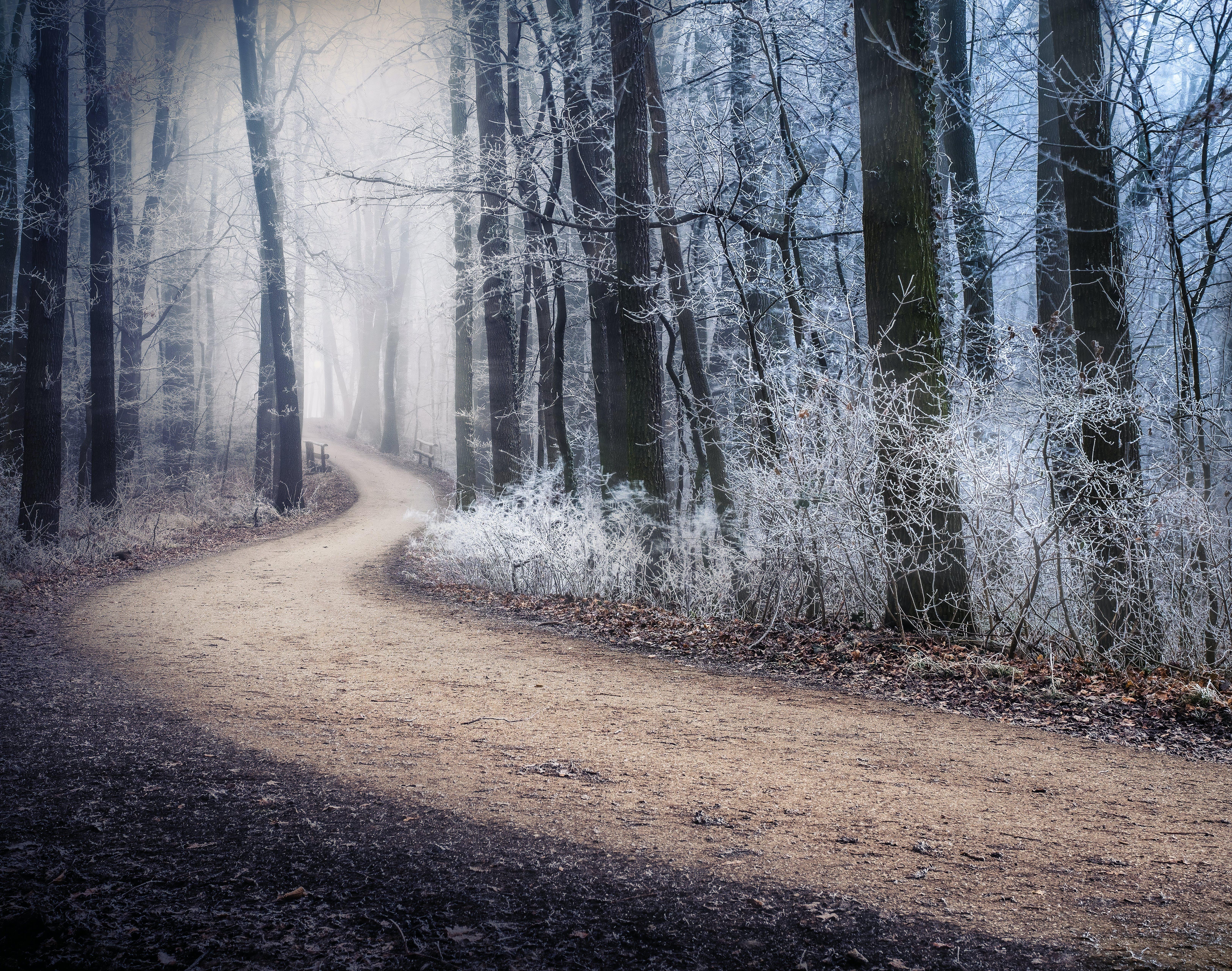 Kostenloses Stock Foto zu bäume, nebel, neblig, pfad