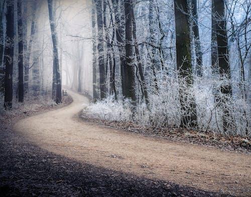 小径, 木, 森の中, 森林の無料の写真素材
