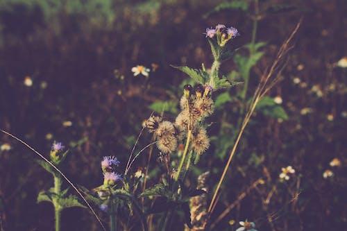 ビンテージ, 自然, 自然の美, 花の無料の写真素材