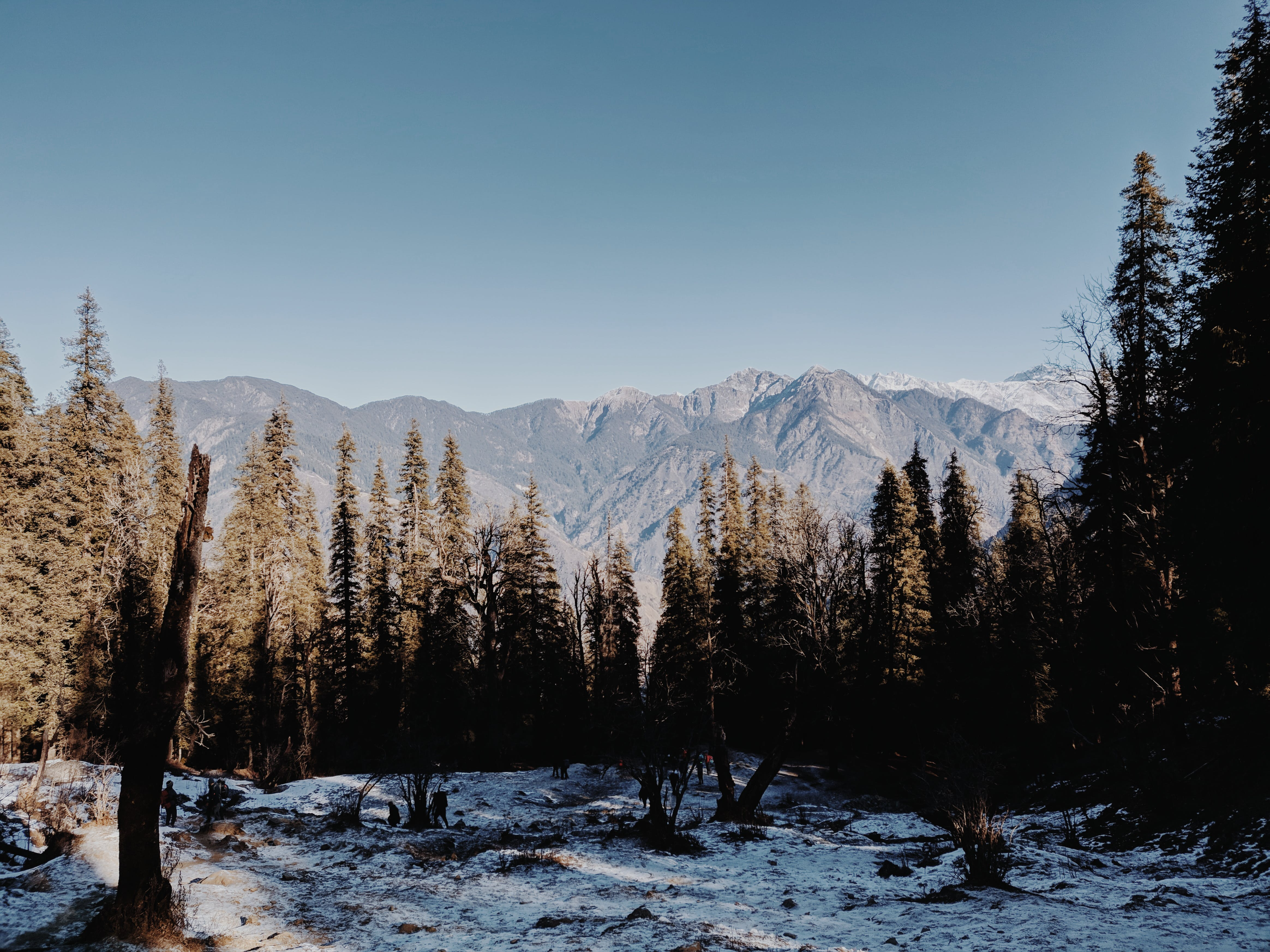 Photo Of Trees And Mountain