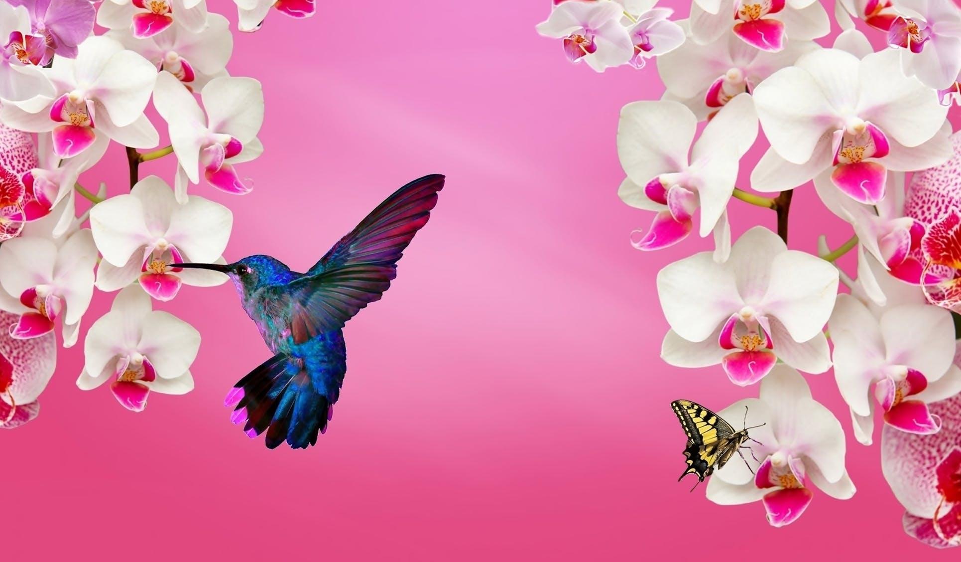 Free stock photo of ave, beija flor, natureza, orquídeas