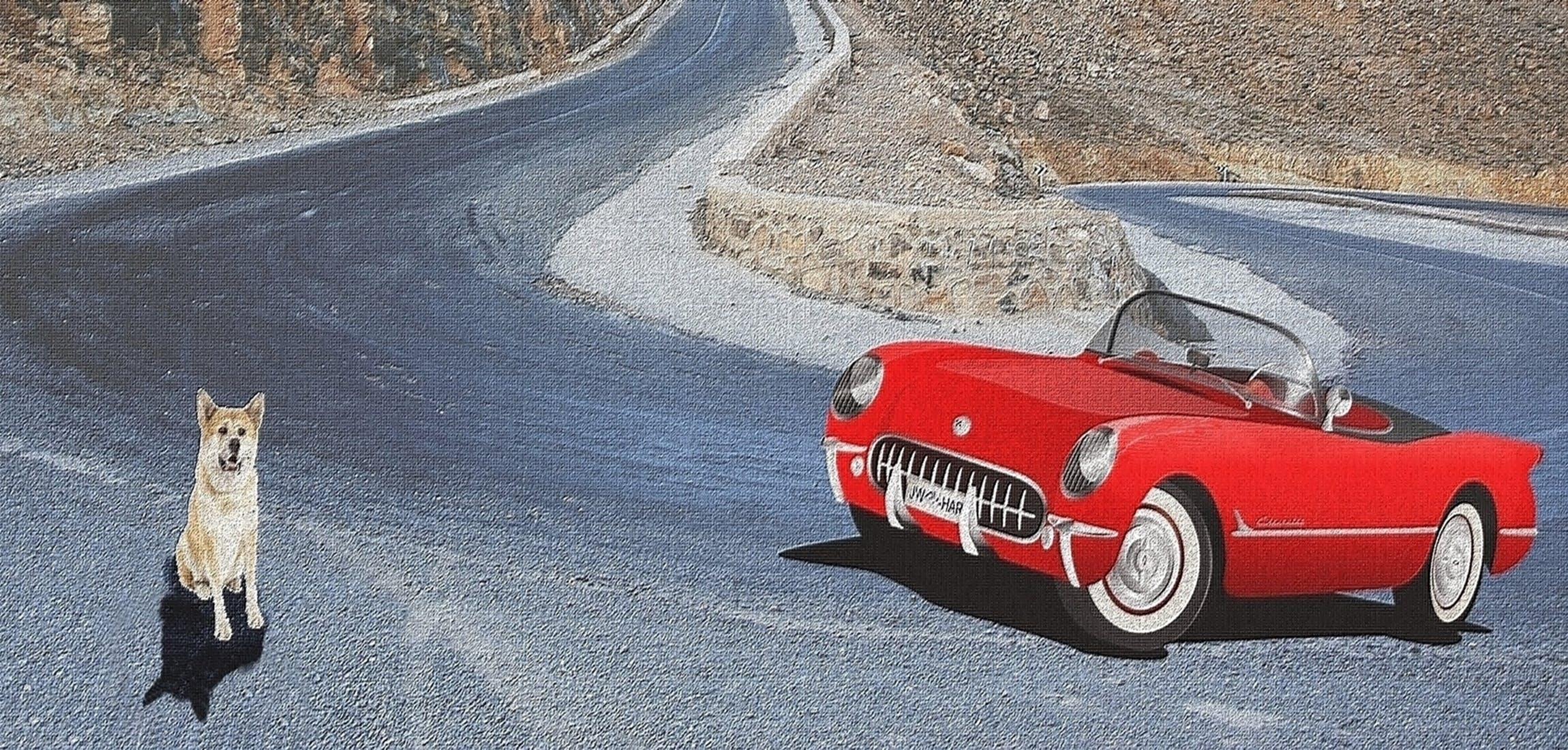 carro esporte, cão, estrada