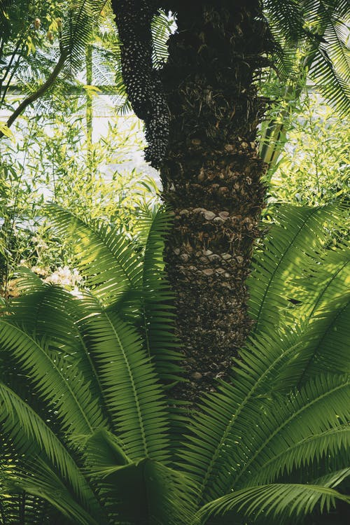 Pianta Di Palma Vicino Albero A Foglia Verde