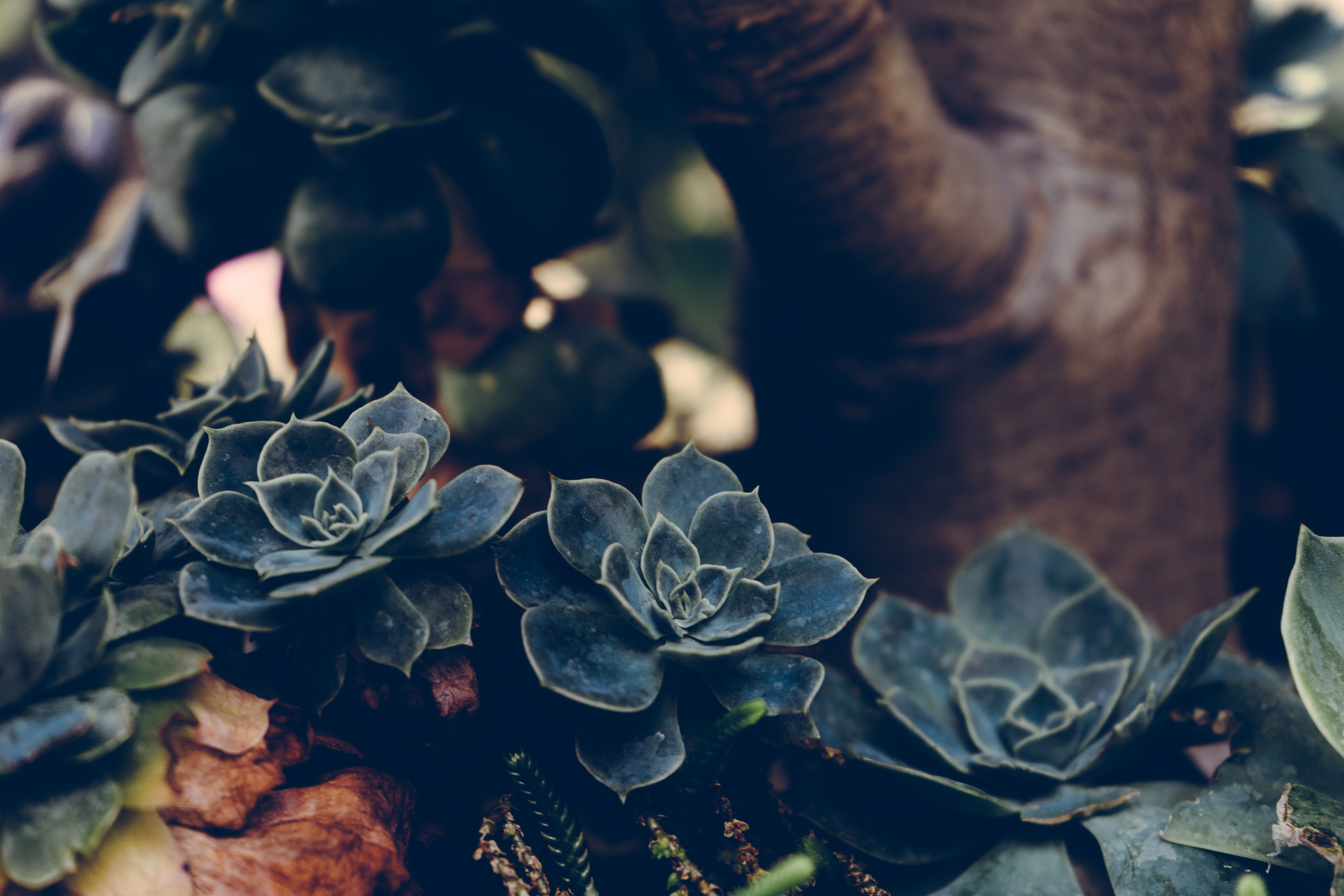 Selective Focus Photography of Green Succulents · Free