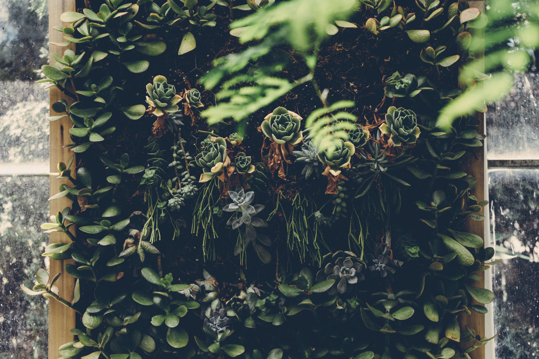 beautiful, botanical, environment
