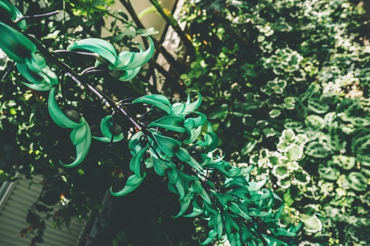 Free stock photo of nature, branches, blur, leaves
