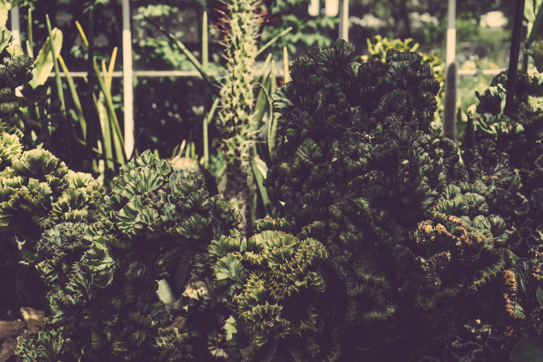 성장, 신선한, 약, 오가닉의 무료 스톡 사진