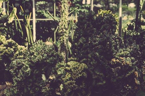성장, 식물, 신선한, 약의 무료 스톡 사진