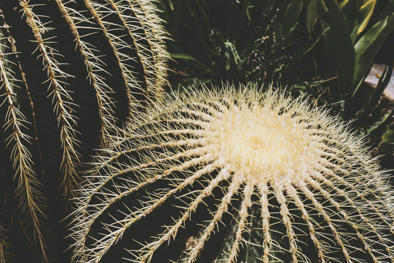 cactus, close-up, color