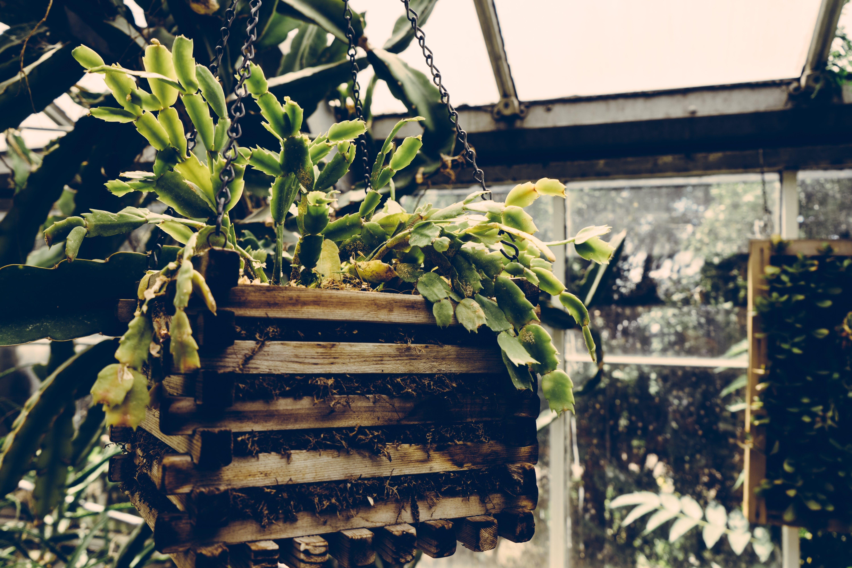 agriculture, botanical, color