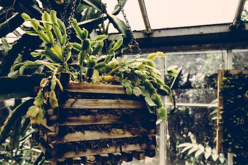 Fotobanka sbezplatnými fotkami na tému botanický, farba, kontajner, les