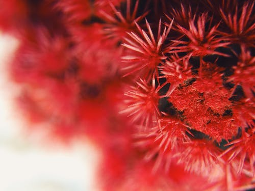 Close-up Photography of Red Cluster Flowers