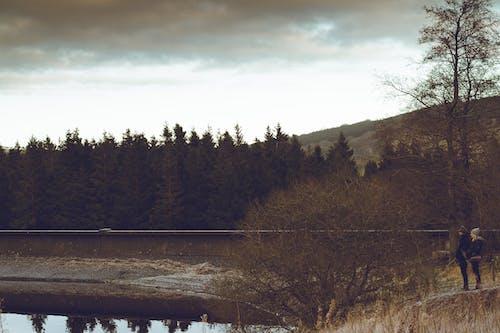 Ảnh lưu trữ miễn phí về cây, danh lam thắng cảnh, gỗ, lochcarron