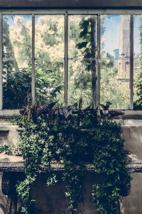 Green Leaf Plant Near Window Pane