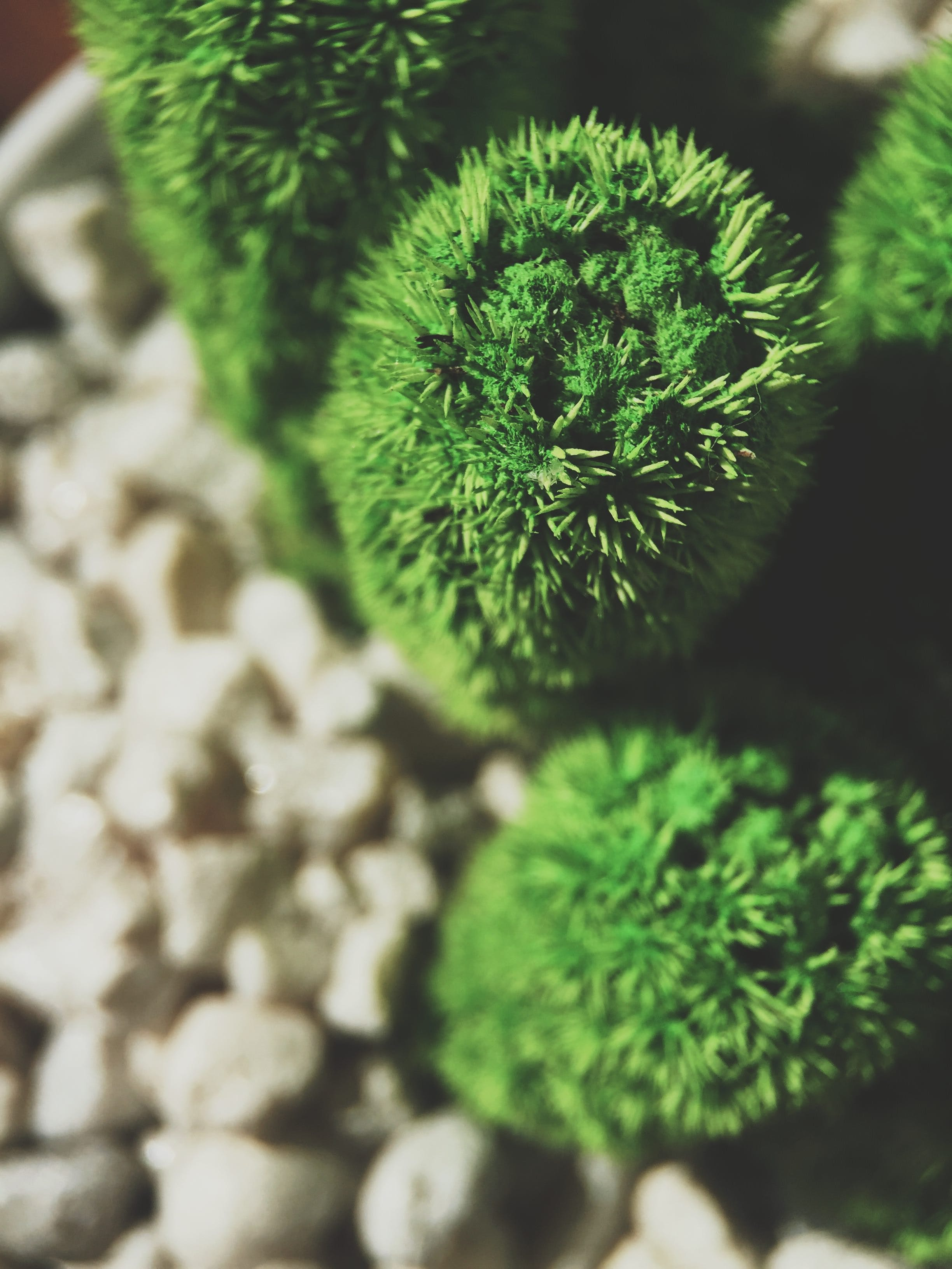 Základová fotografie zdarma na téma botanický, bylinka, dřevo, ekologie