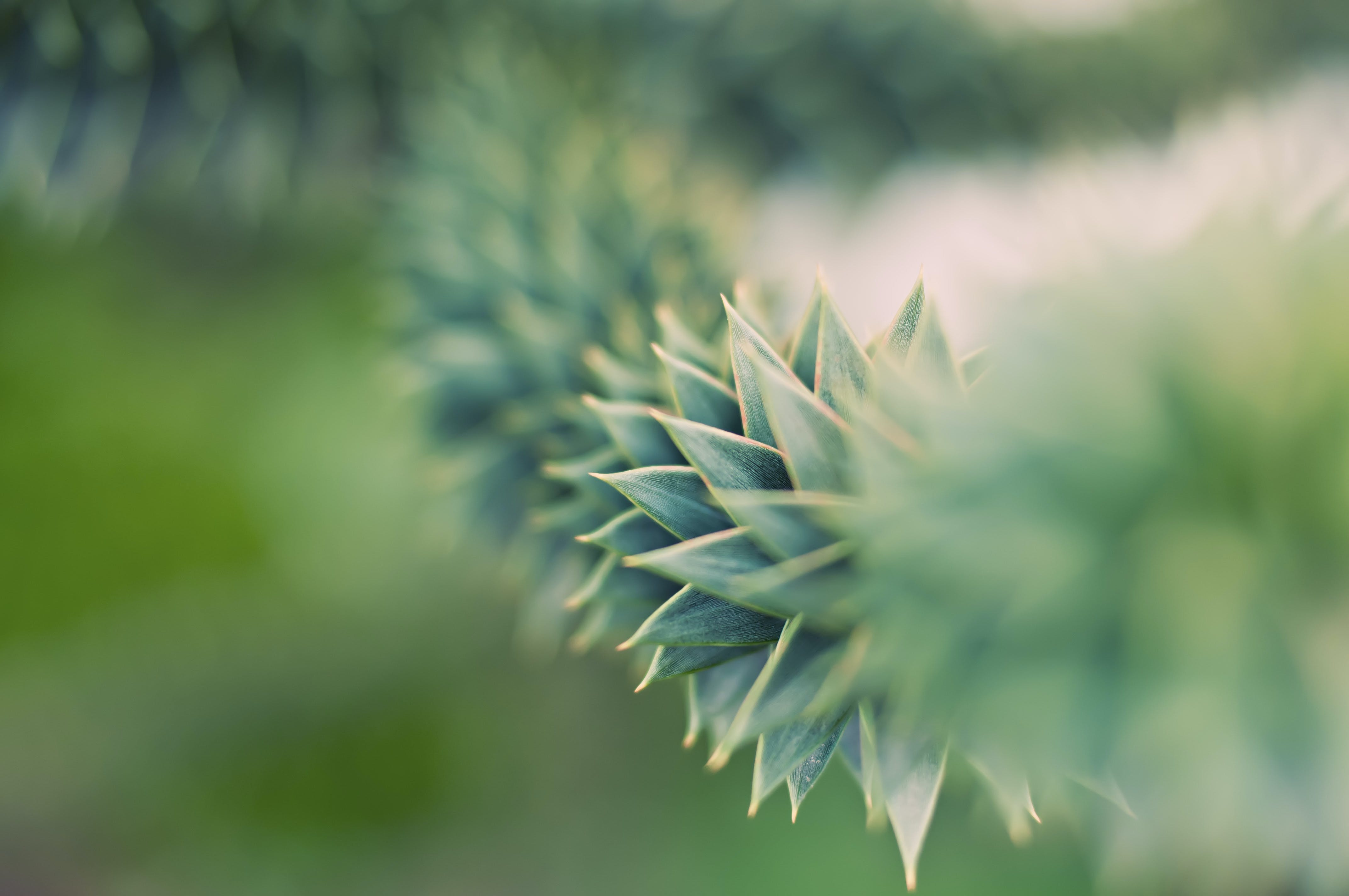 Green Succulent Plant in Close Up Photography