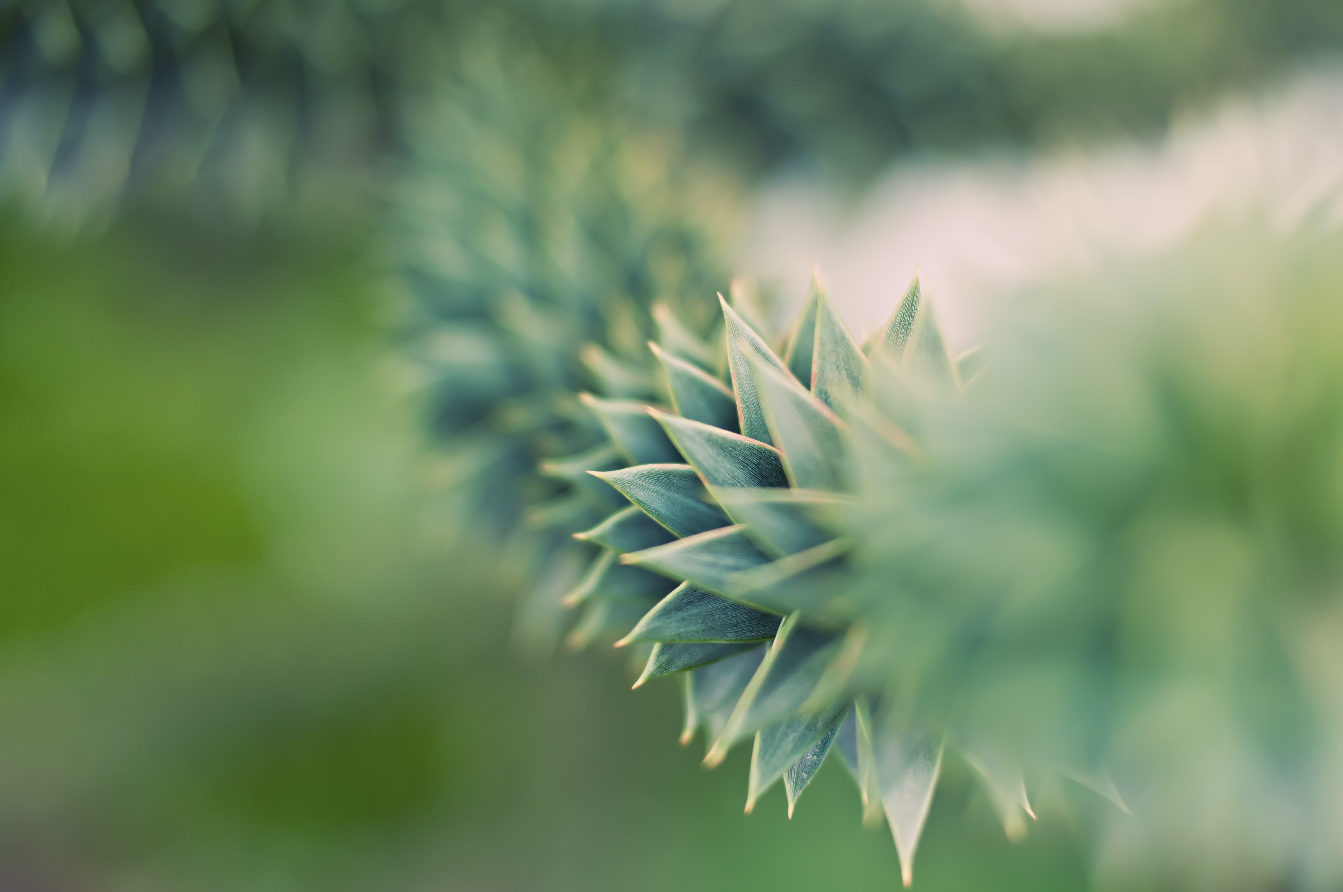 Selective Focus Photography Of Green Succulents 183 Free