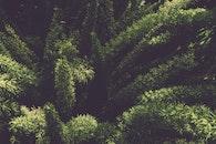 texture, blur, leaves