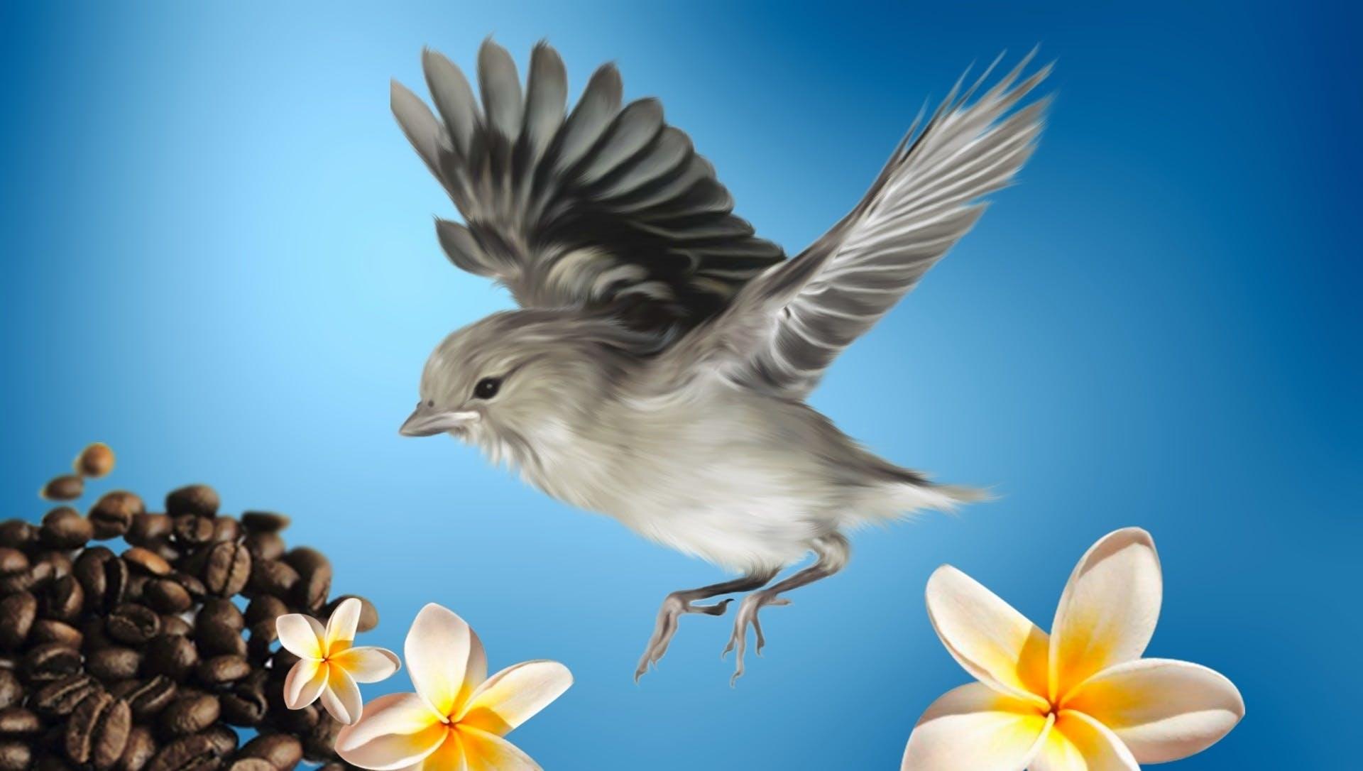 ave, café, flores
