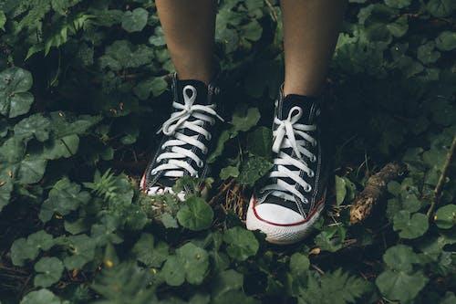 Základová fotografie zdarma na téma chodidla, obuv, rostlina, tenisky