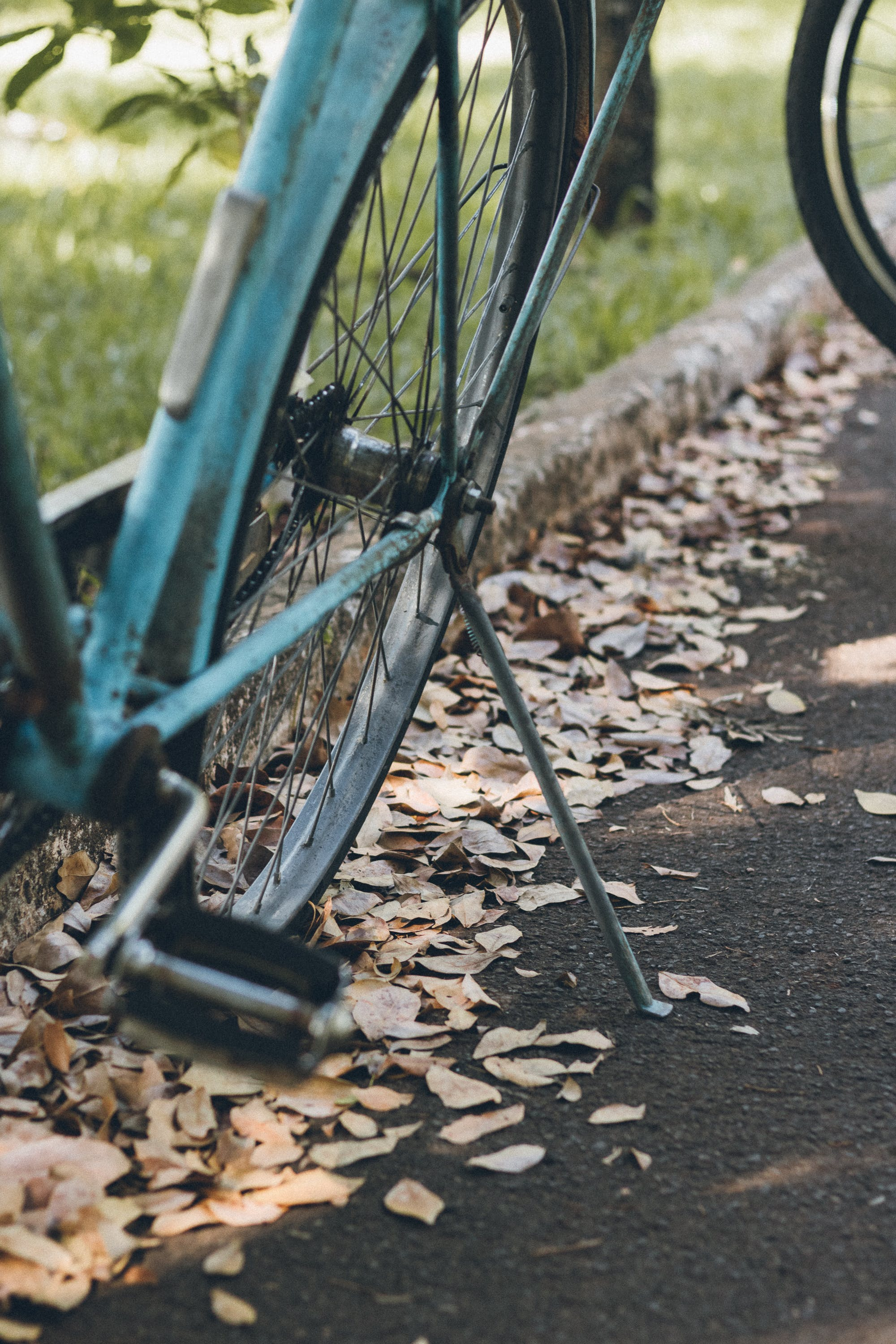 Free stock photo of bike, blue, green, nature
