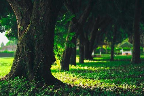 Foto d'estoc gratuïta de arbre, capvespre, fotografiat, natura