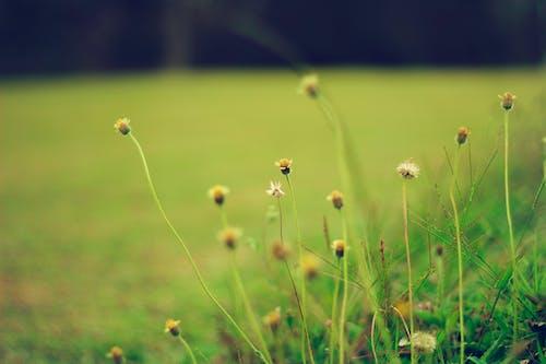 Foto d'estoc gratuïta de bonic, flors, flors boniques, fons de pantalla