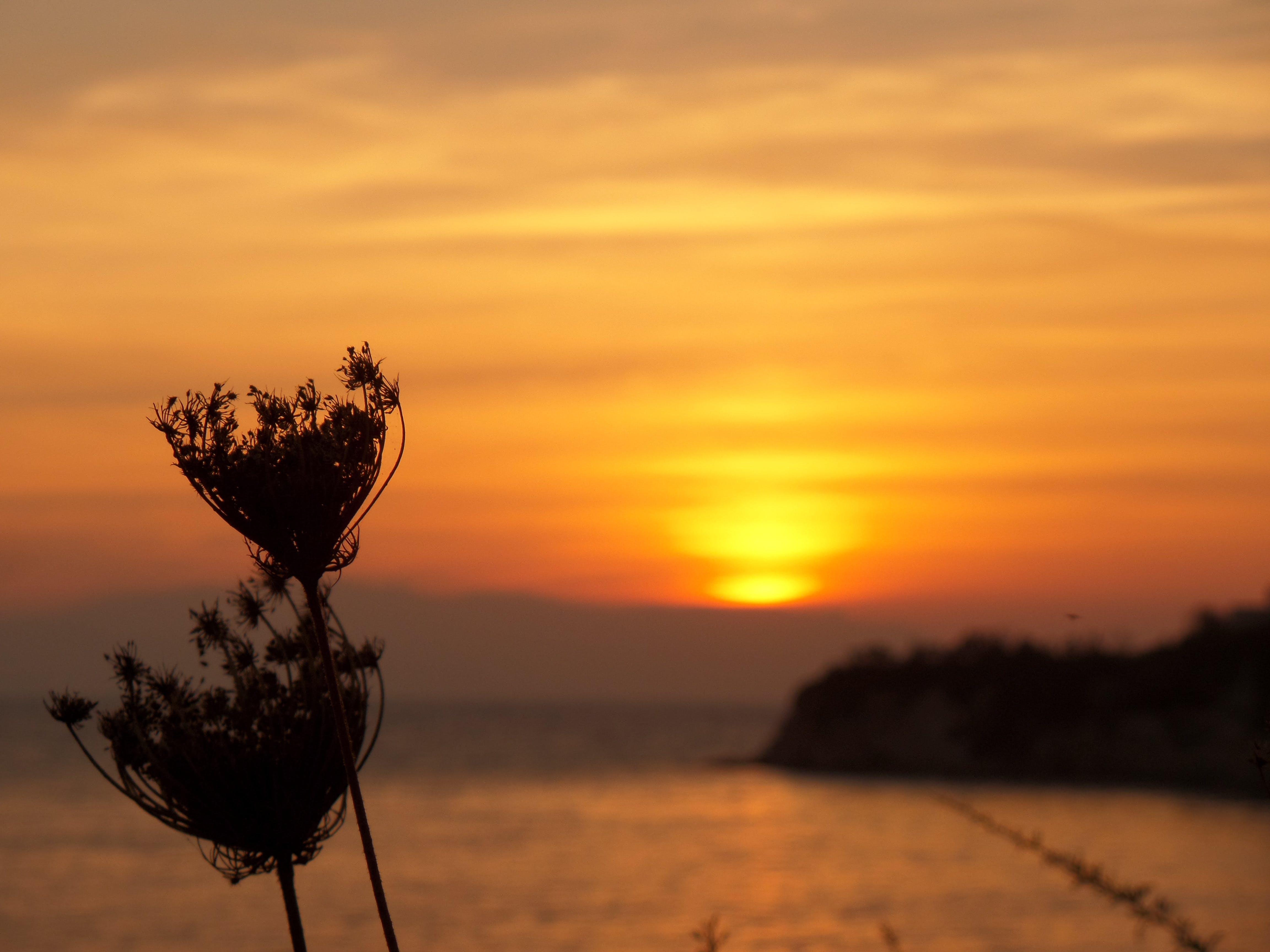 Free stock photo of Beautiful sunset, beauty, dawn, orange
