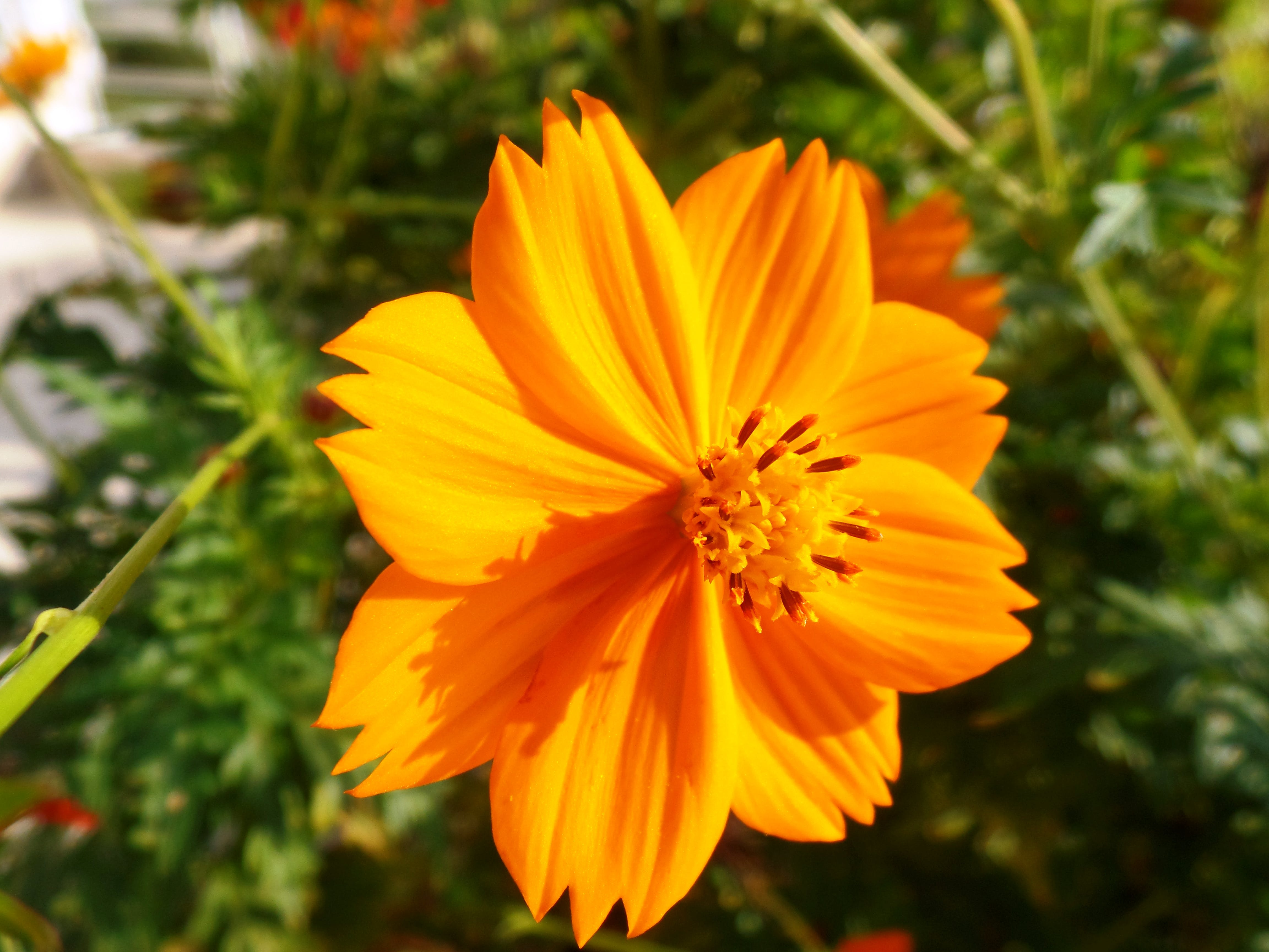 Free stock photo of beautiful, beautiful flower, beauty in nature, flower