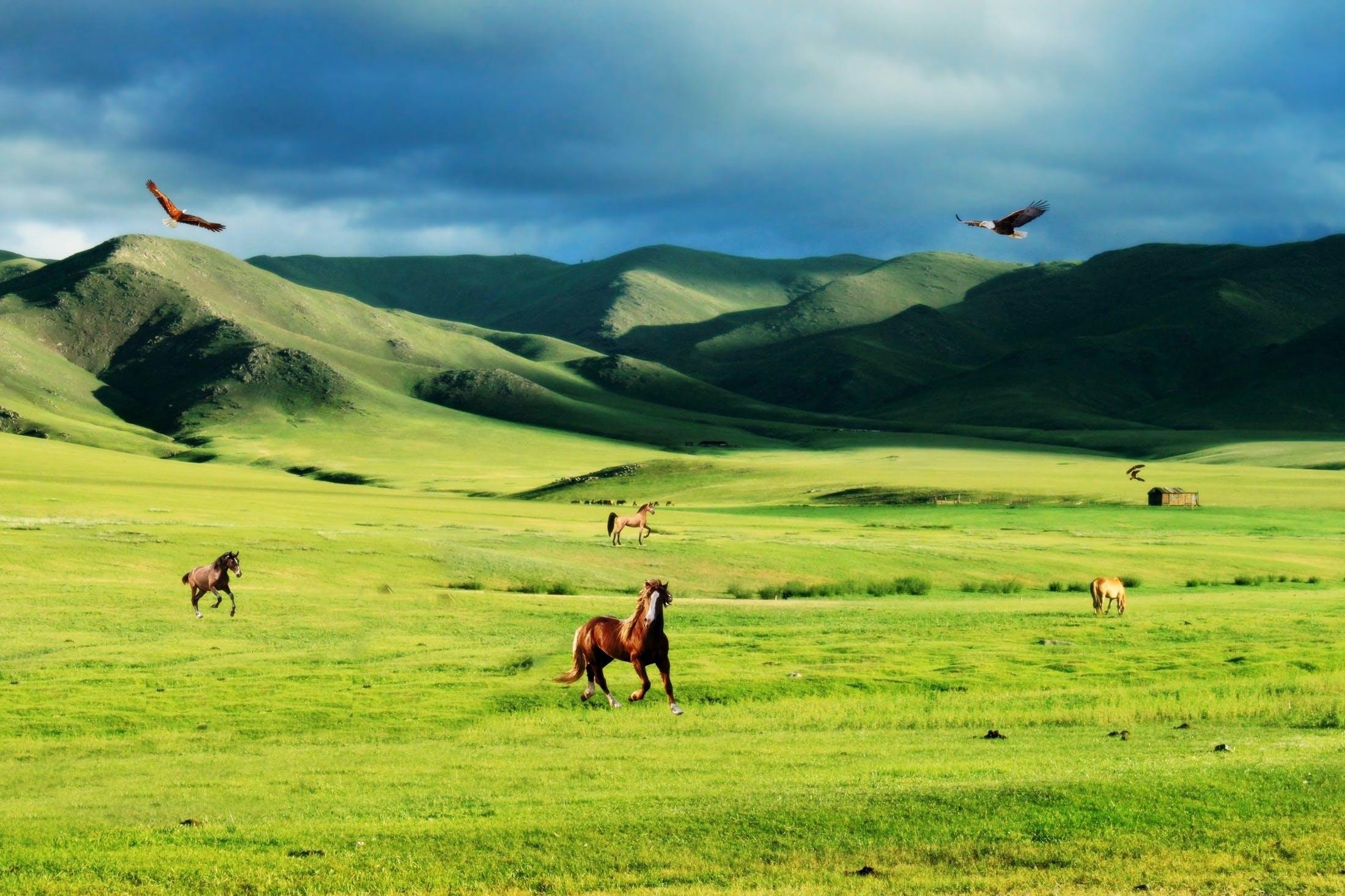 aves, águias, cavalos