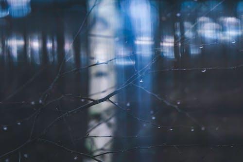 คลังภาพถ่ายฟรี ของ ก้าน, เปียก