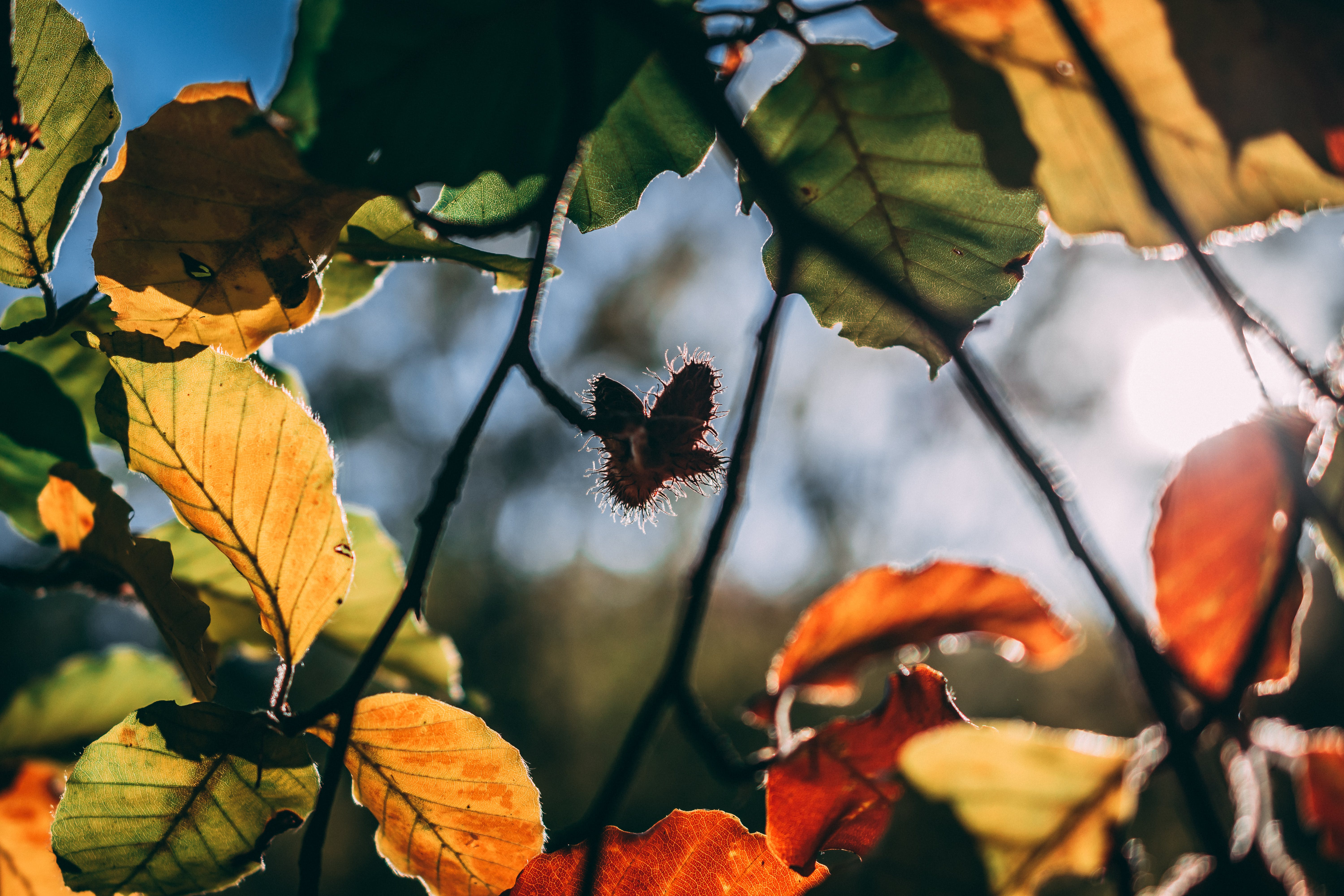 Free stock photo of autumn, colors, green, leaves