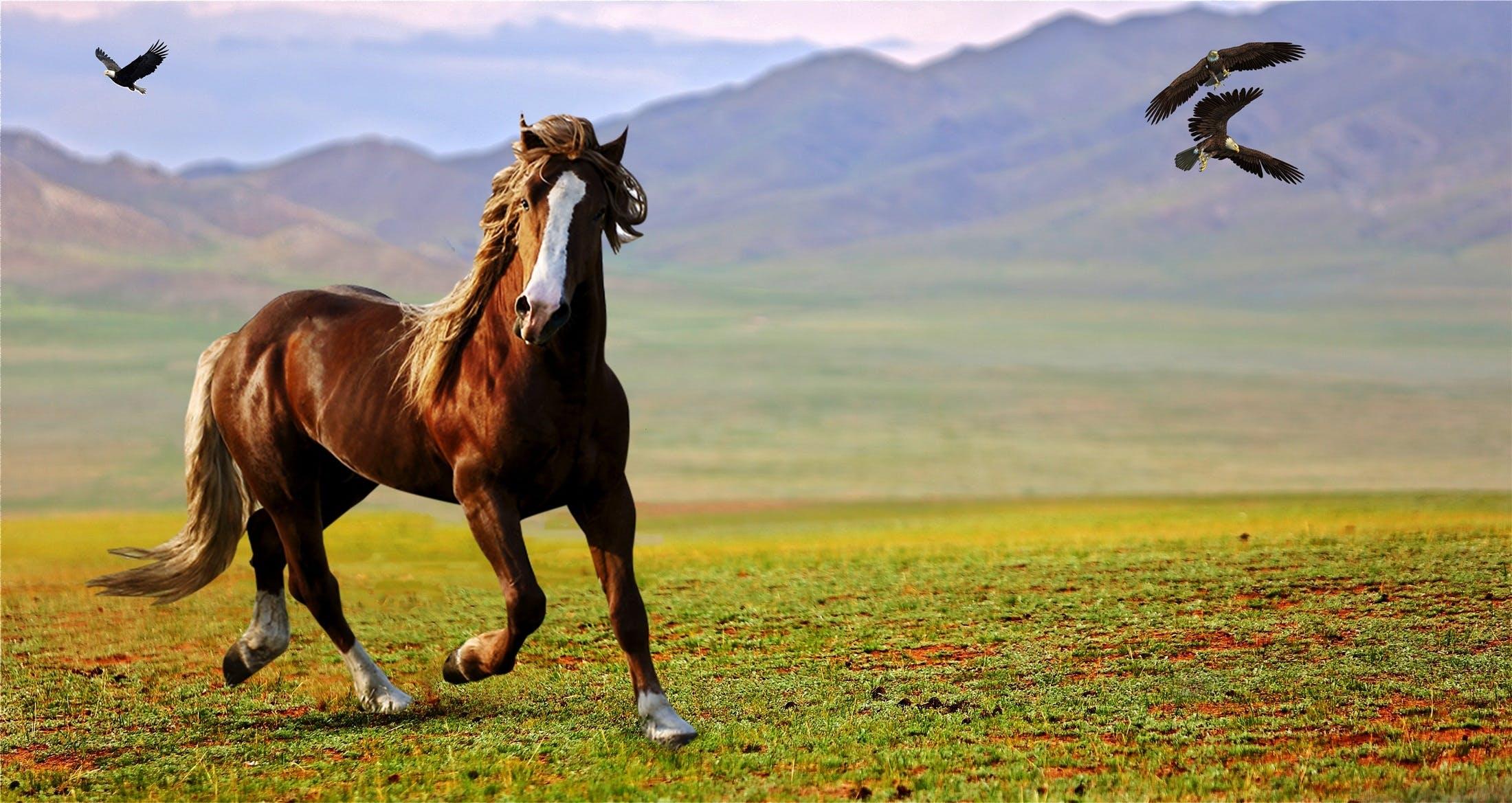 águias, cavalo, montanhas