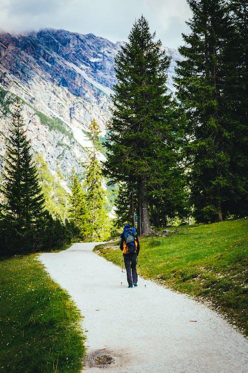 のどか, ハイキング, モミの木, 人の無料の写真素材