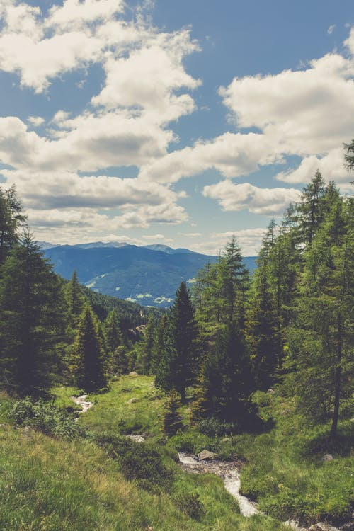 Free stock photo of adventure, alps, clouds, conifers