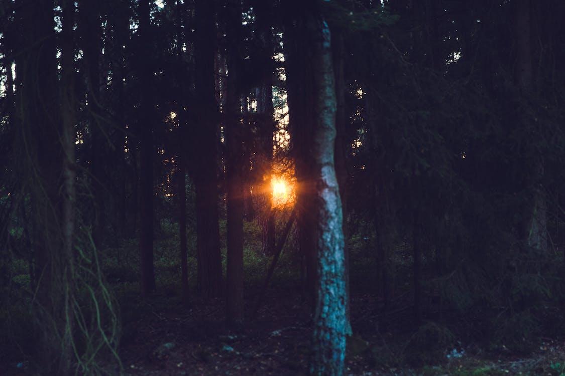 idylický, kmen, les