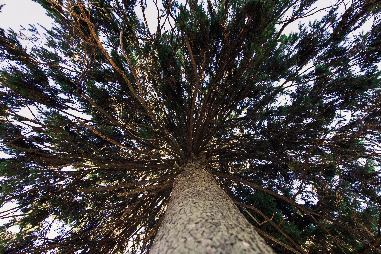bark, branches, environment