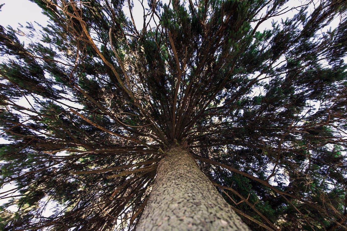 arbre, bagul, banyador per a home