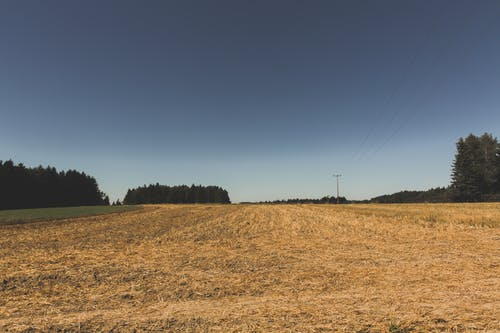 天性, 天空, 寧靜, 樹木 的 免费素材照片