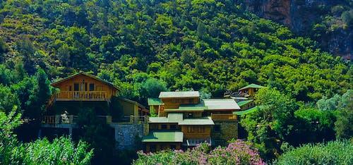 Photos gratuites de arbres, architecture, forêt, maisons
