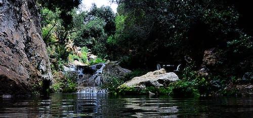 คลังภาพถ่ายฟรี ของ กระแสน้ำ, ก้าน, ความเป็นป่า, งดงาม