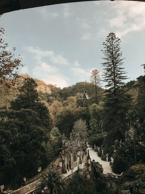 Δωρεάν στοκ φωτογραφιών με αειθαλής, βουνό, γραφικός, δασικός
