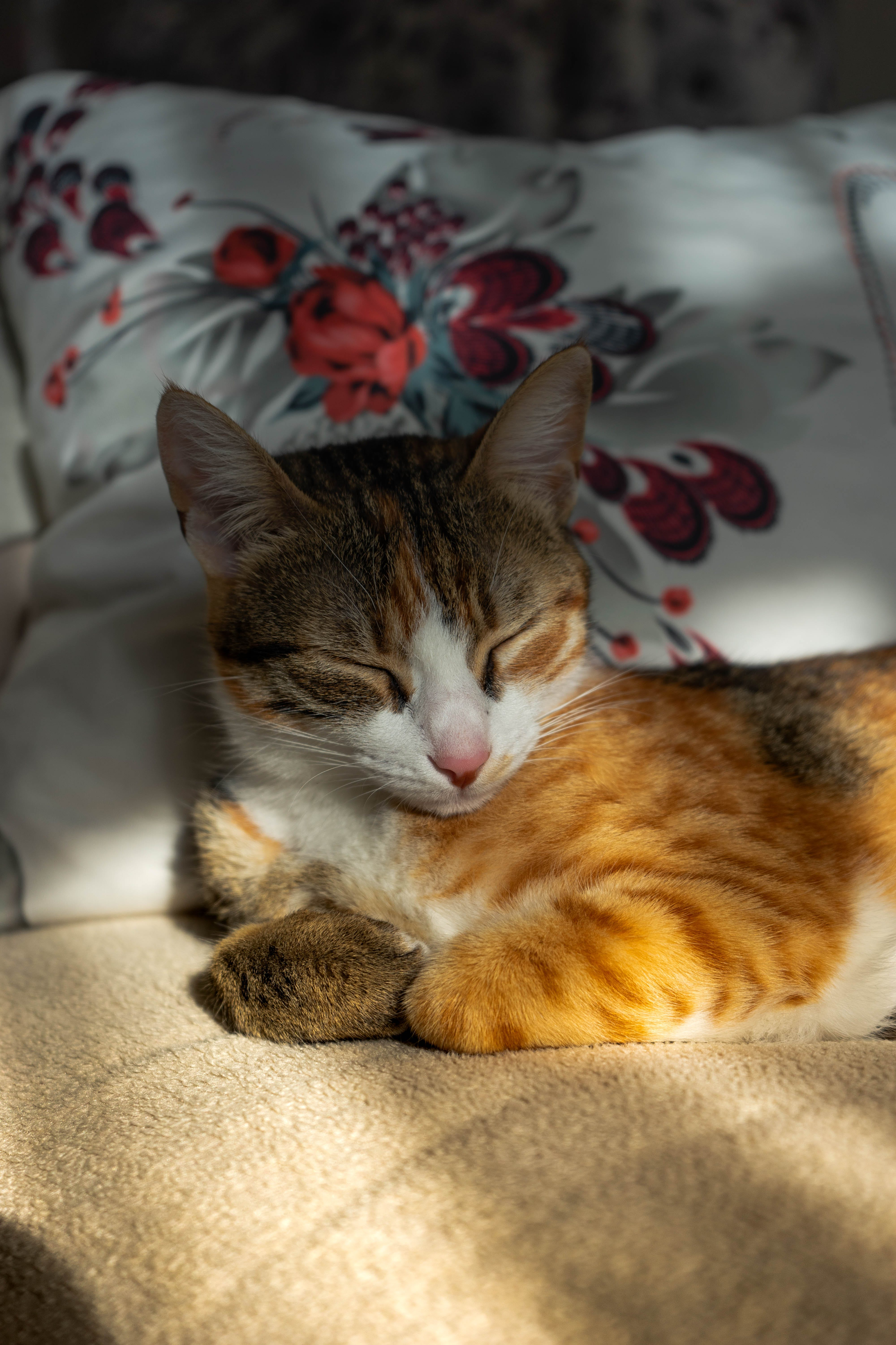 Orange and Brown Tabby Kitten Sitting on Beige Textile