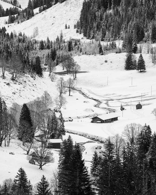 Foto profissional grátis de clima, com frio, estação de esqui, inverno