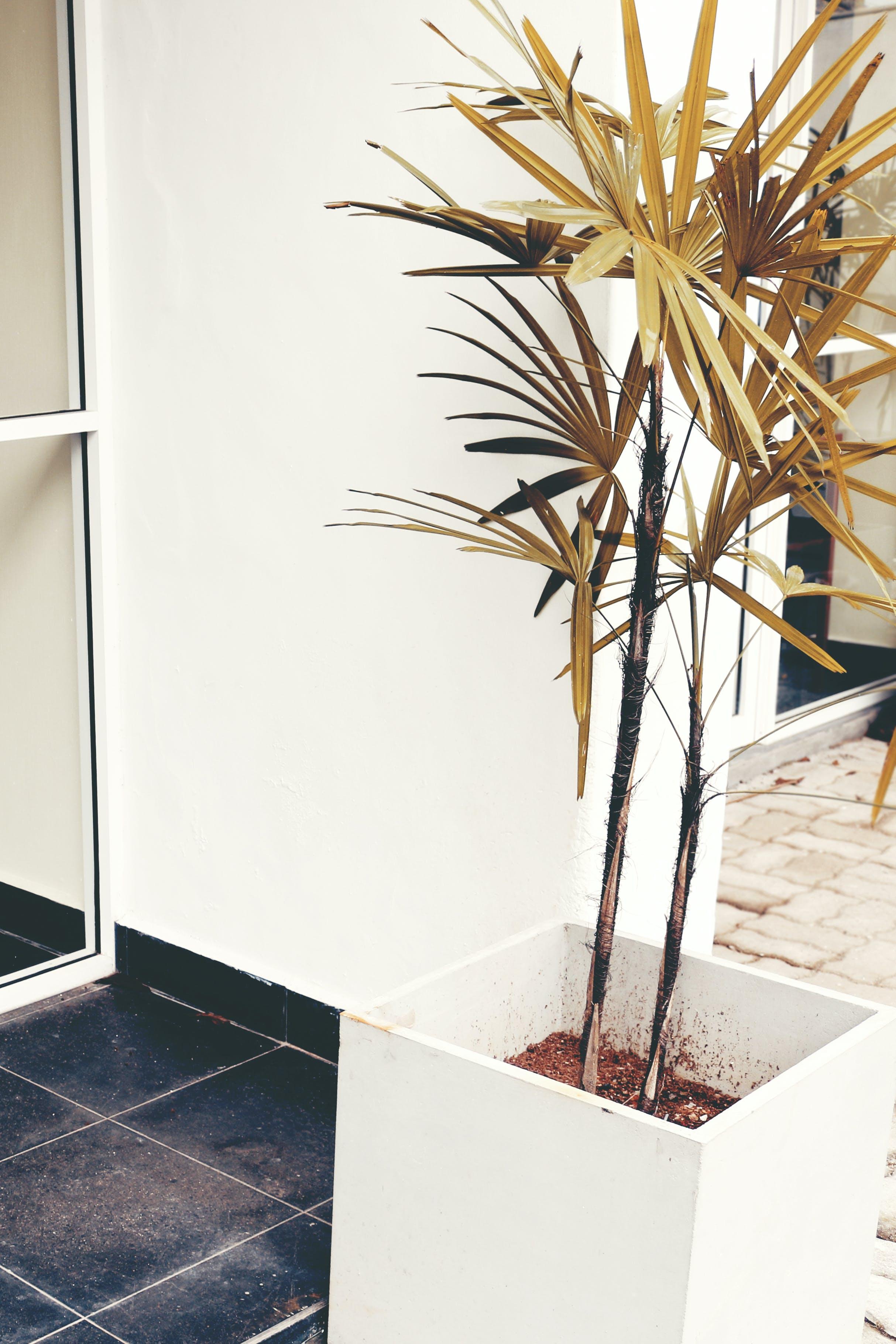 ağaç, bitki, büyüme, çevre içeren Ücretsiz stok fotoğraf