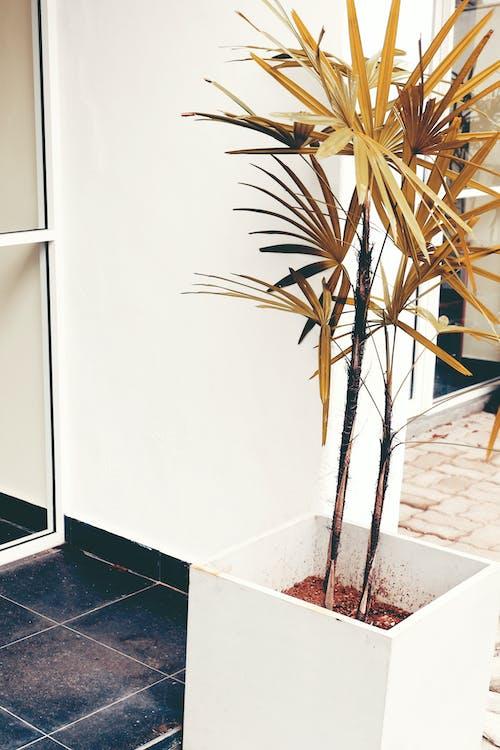 Darmowe zdjęcie z galerii z drzewo, jasny, liście palmowe, roślina