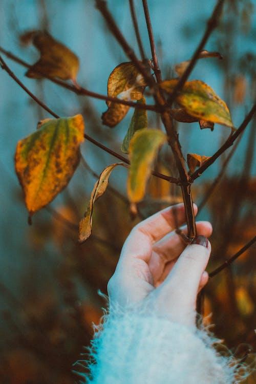 คลังภาพถ่ายฟรี ของ พืช, มือ