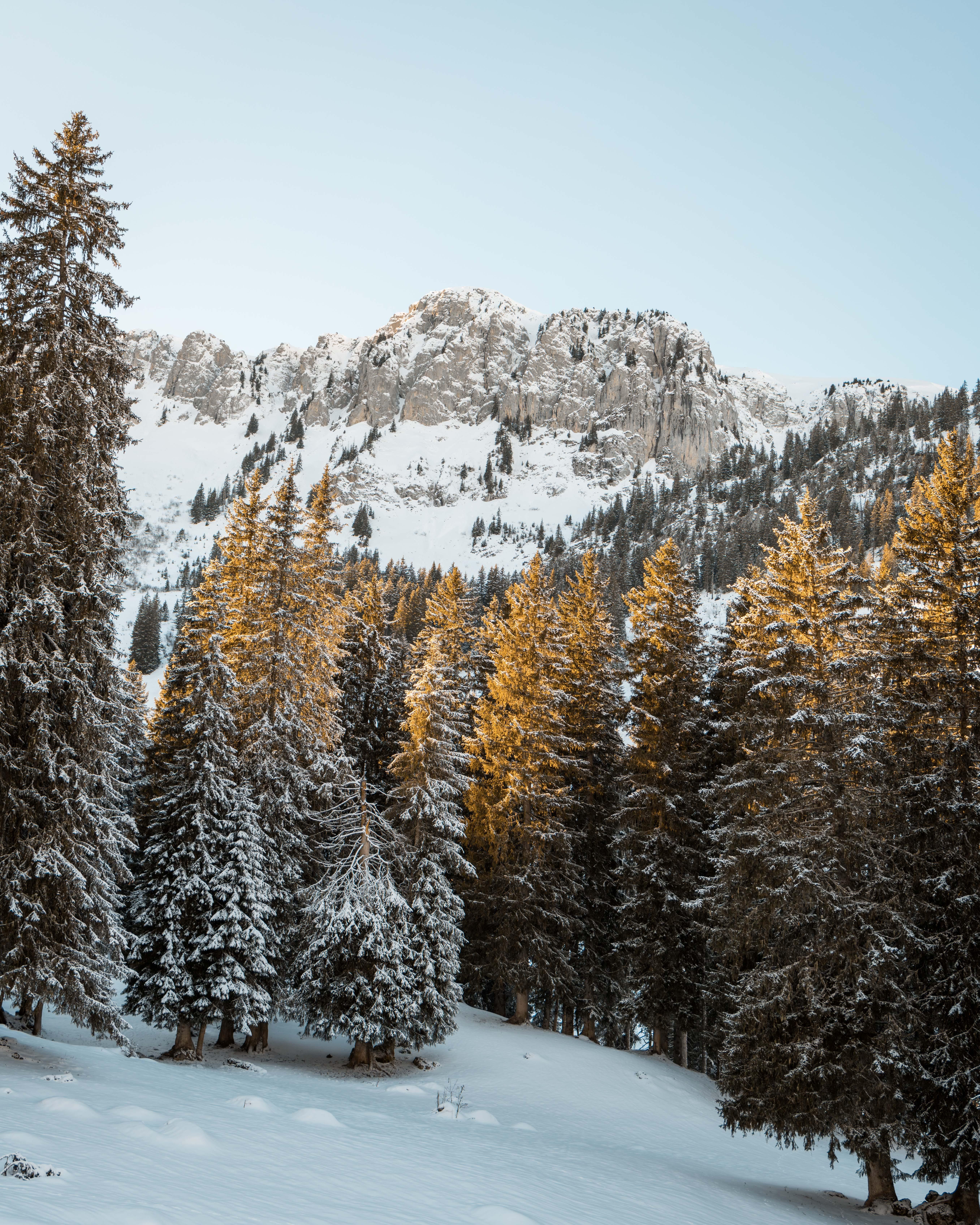 下雪的, 下雪的天氣, 冬季, 冷 的 免费素材照片