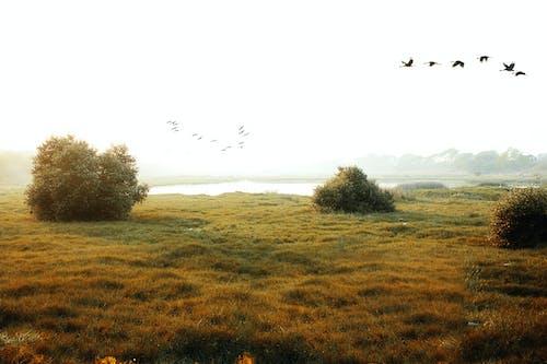 Ilmainen kuvapankkikuva tunnisteilla 4k taustakuva, abstrakti kuva, Adobe Photoshop, auringonlasku